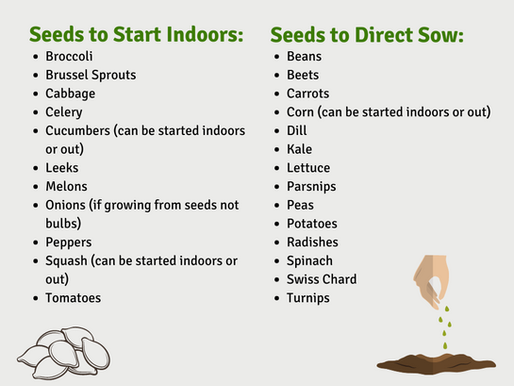 What Seeds to Start Indoors and What to Direct Sow