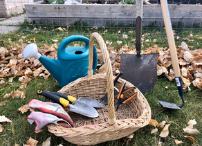My Favourite Gardening Tools From Amazon