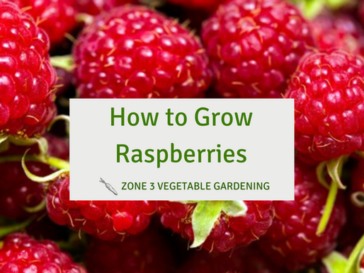 Everything You Need to Know to Grow Raspberries