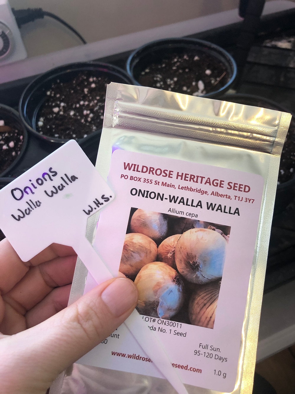 One option of where to buy vegetable seeds in Alberta, Canada is Wildrose Heritage Seed who carries many heirloom seeds.