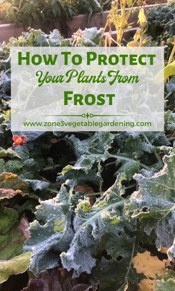 What to use to cover your plants when it freezes outside and how to cover your plants during frost so they don't die.
