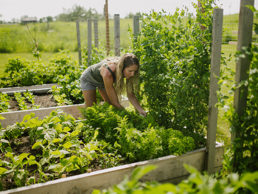 6 Things to Consider When Planning a New Vegetable Garden