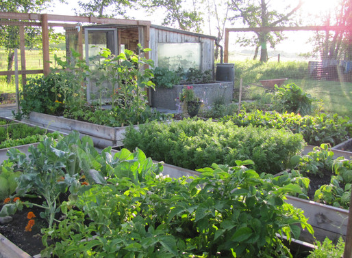 Vegetables That Can be Planted in Late Spring