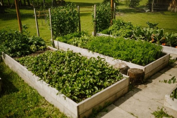 Zone 3 Calgary Alberta Vegetable Garden.