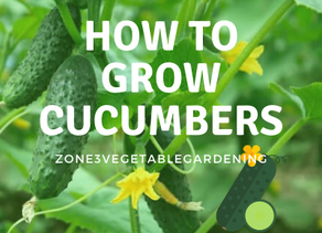 How to Successfully Grow Cucumbers