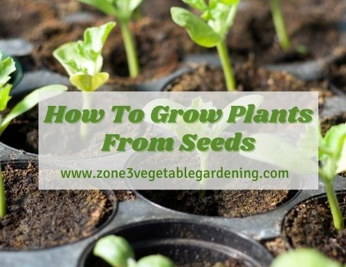 How to Grow Plants From Seeds - A Step by Step Guide