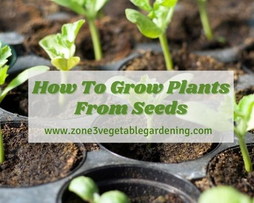When looking at how to grow plants from seed step by step consider seed quality, soil, water, pot and light for best seeds germination and growth.