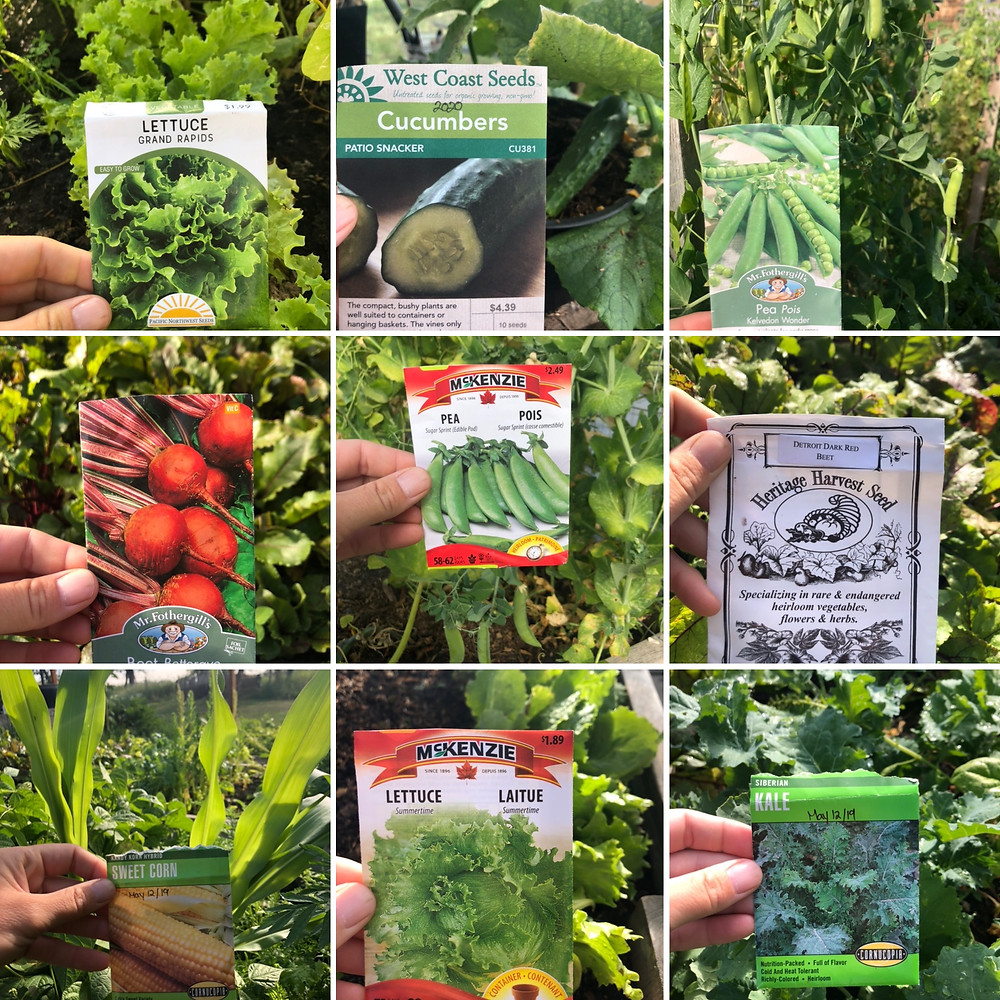 A favourite variety of vegetable seeds that grow well in a zone 3, Alberta backyard vegetable garden.