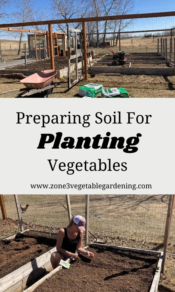 Preparing soil for planting vegetables like tomatoes and potatoes.