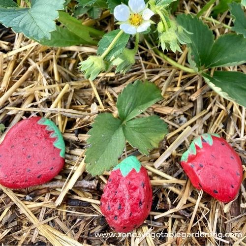 DIY garden crafts, strawberry rock bird decoy for your garden with supply list and instructions.