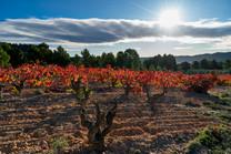 Viña Memorias - Vineyards