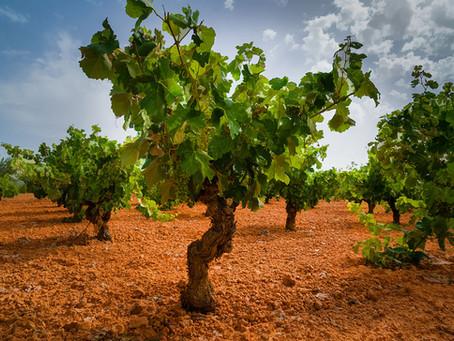 Vinos Kosher en territorio Bobal
