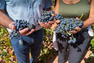 Viña Memorias - Bobal Grapes