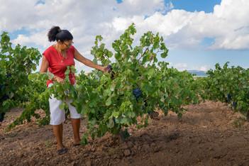 Viña Memorias - Bobal Vines