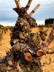 Viña Memorias - Old Bobal Vine