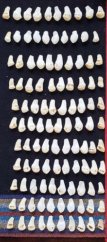 Real Elk Ivory Necklace Sets