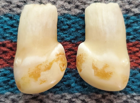 How to drill elk ivories and repair the root if needed.