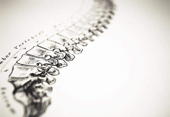 Spine-drawing-antique-iStock_00000544422