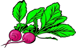 PikPng.com_radishes-png_3922336.png
