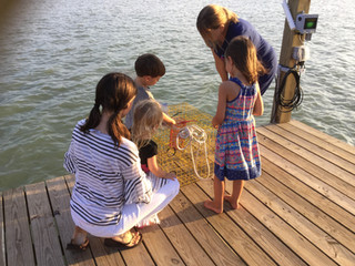 catch crab off the dock