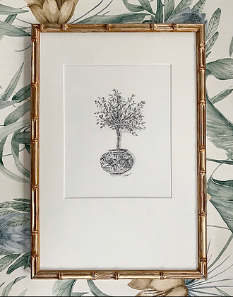 Shodoshima Olive Tree