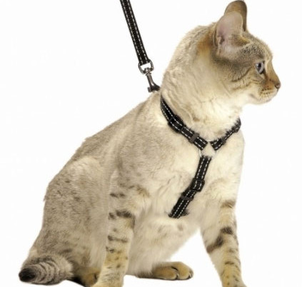 Kit harnais (Safe bobby)