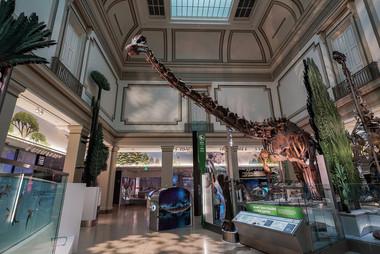 David H. Koch Hall of Fossils - Deep Time