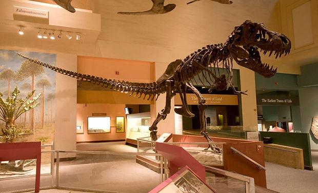 dinosaurwing.jpg
