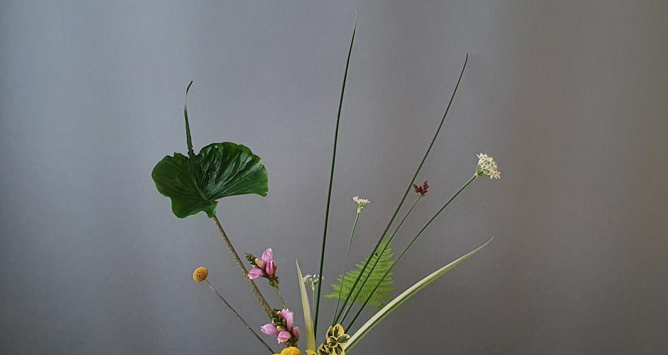 Shoka Shimutai door Jane