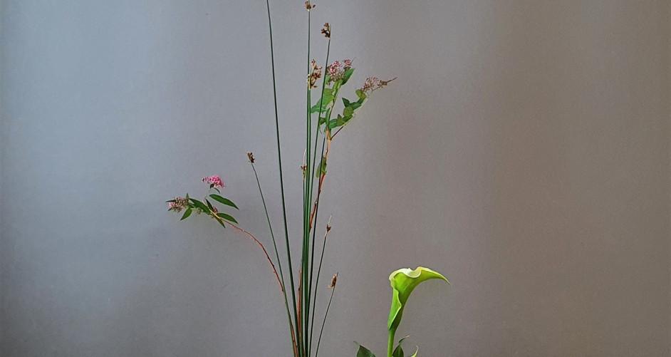 SHoka Shofutai door Mei S.