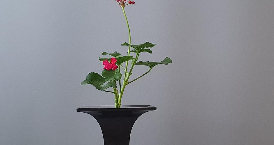 Shoka Shofutai door Shigemi