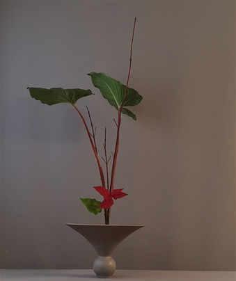 Shoka Shimputai door Noriko v.d. Linden
