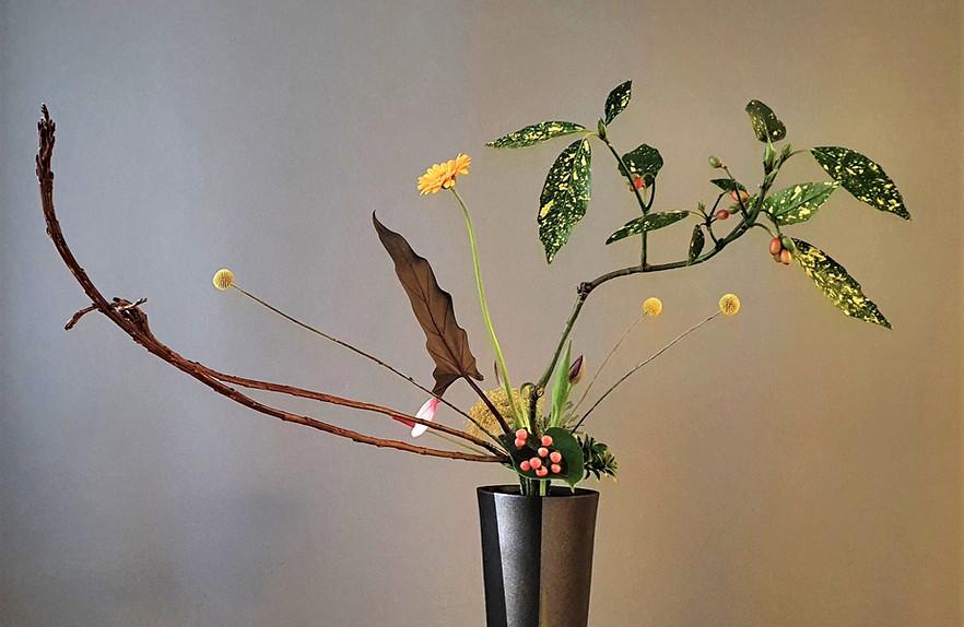 Rikka Shimputai by Yvonne Roels