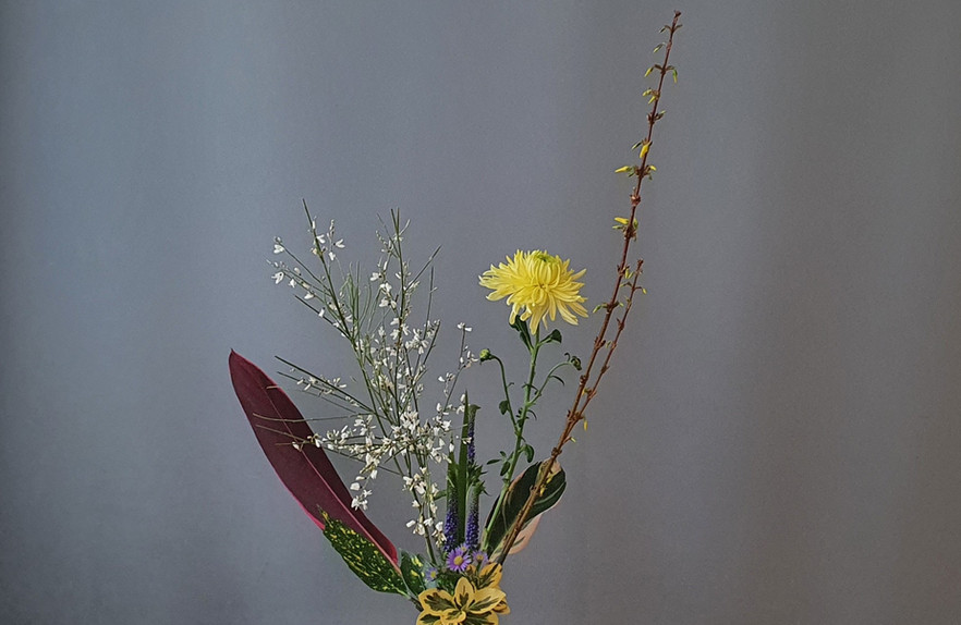 Rikka Shimputai by Jane