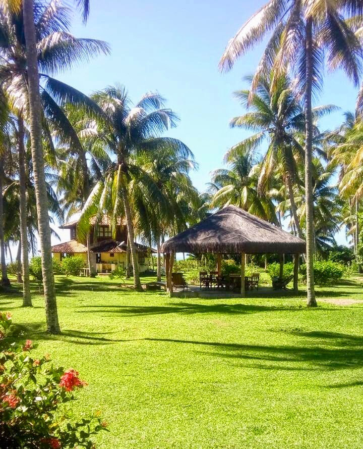The coconut farm where our retreat takes place
