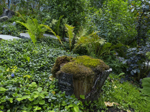 International Flora