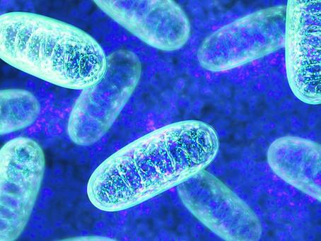 Mitochondrien (Mt)- die Kraftwerke unserer Zellen