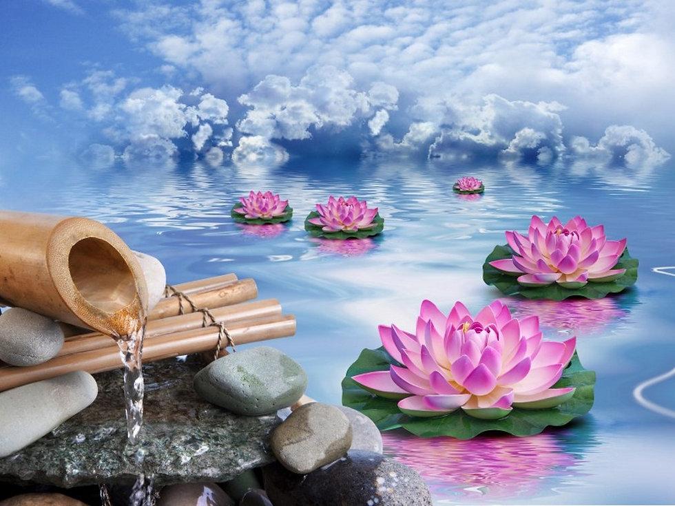 fleurs lotus.jpg