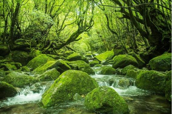 自然盛り沢山な場所ではどこでもYoga☺︎