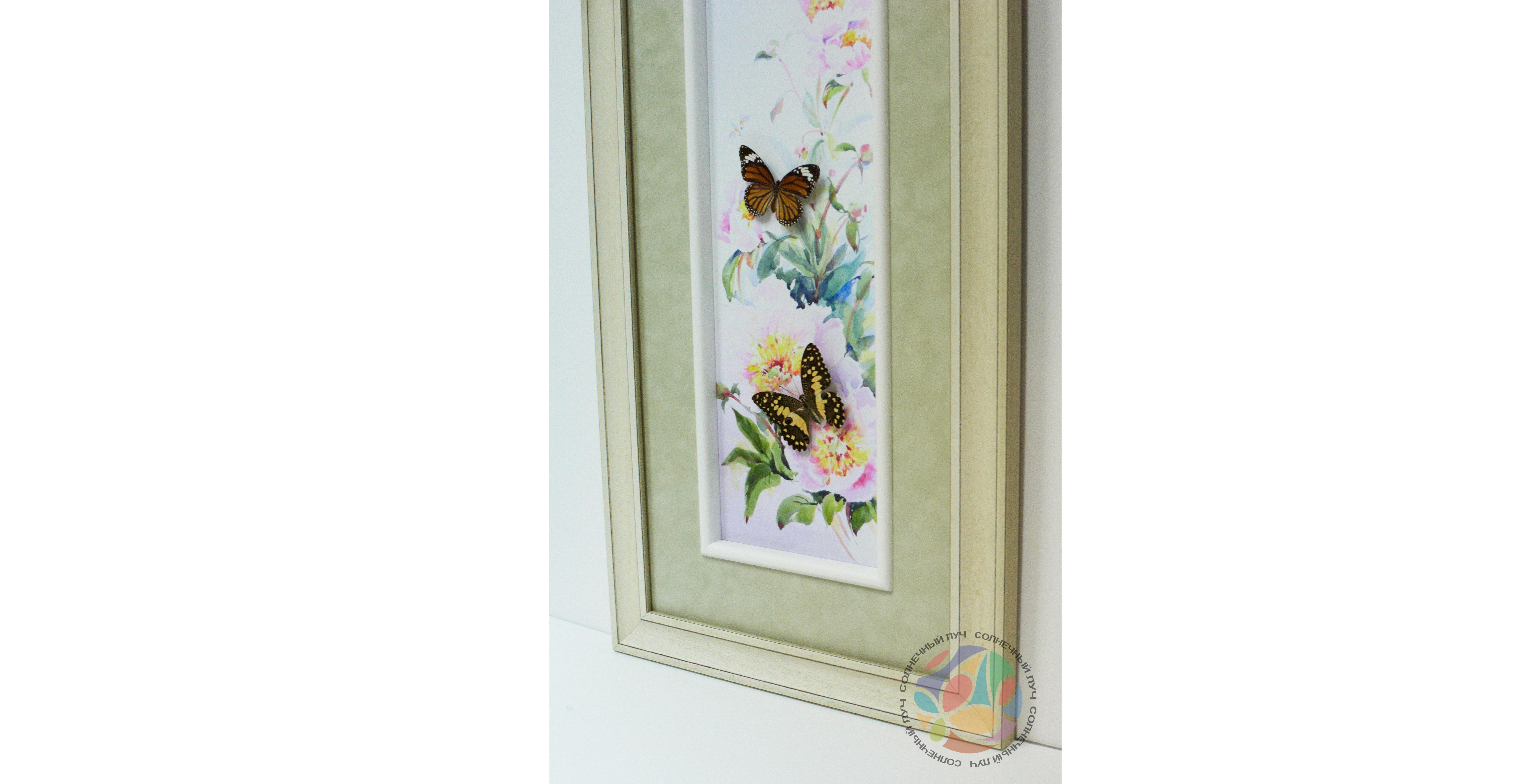 Бабочки2.jpg