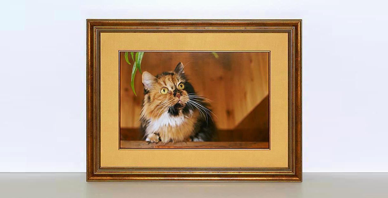 cats-house-01-130.jpg