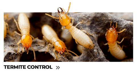Termite Control.png