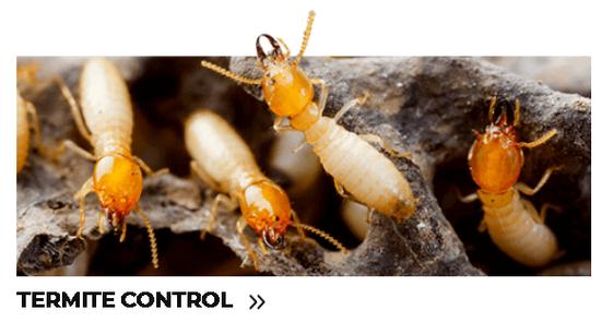 Termite Control.png