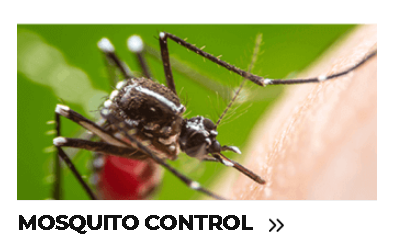 Mosquito Control.png