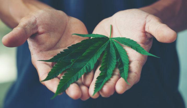 hand-holding-marijuana-leaf_2431-394.jpg