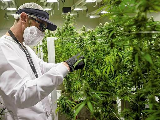 El cannabis colombiano que llegó a México para tratar a un niño con epilepsia