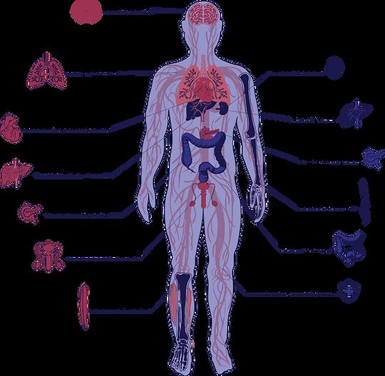 Ikanik-endocannabinoid-web.png