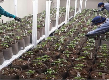 Ikänik Farms Announces 100% Acquisition of Pideka SAS, a Leading Colombian Medical Cannabis Company
