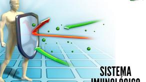 Sistema imunológico: como potencializá-lo com a alimentação.