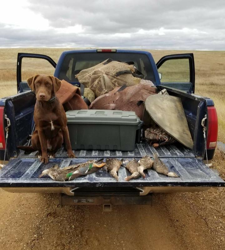32. Sammi dog hunting.jpg